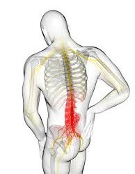 CHEK Exercises For Lower Back Pain For Business Fast London